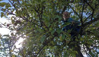 Obst Pflücken - Mundraub.org